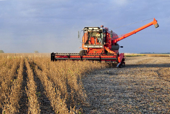 Soybean Harvest AFBIS, Inc.