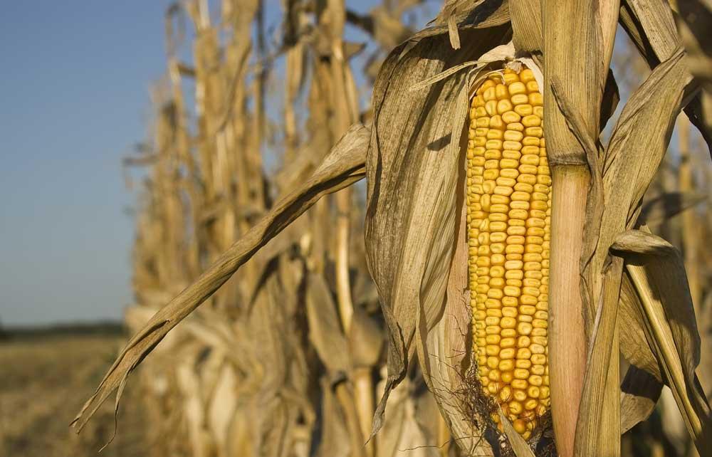 Corn PPA